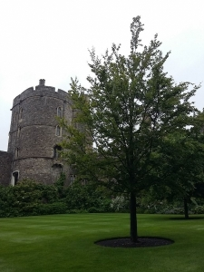 windsor castle (3)