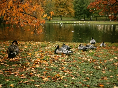 St. James's Park London