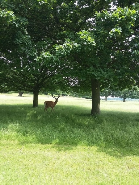 richmond park (12)