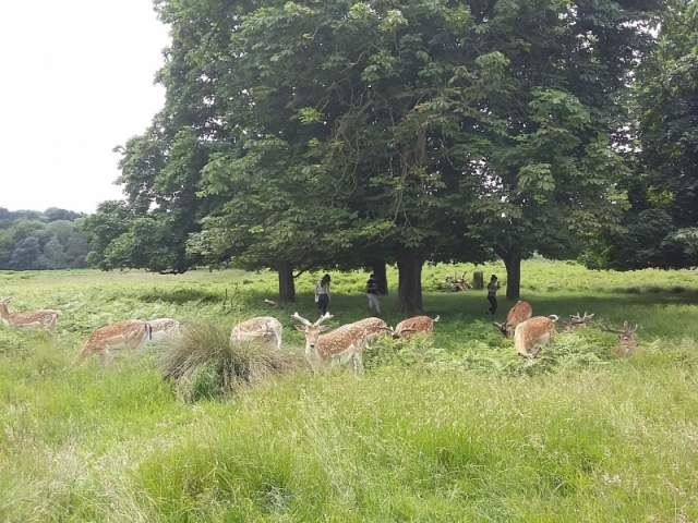 richmond park (9)